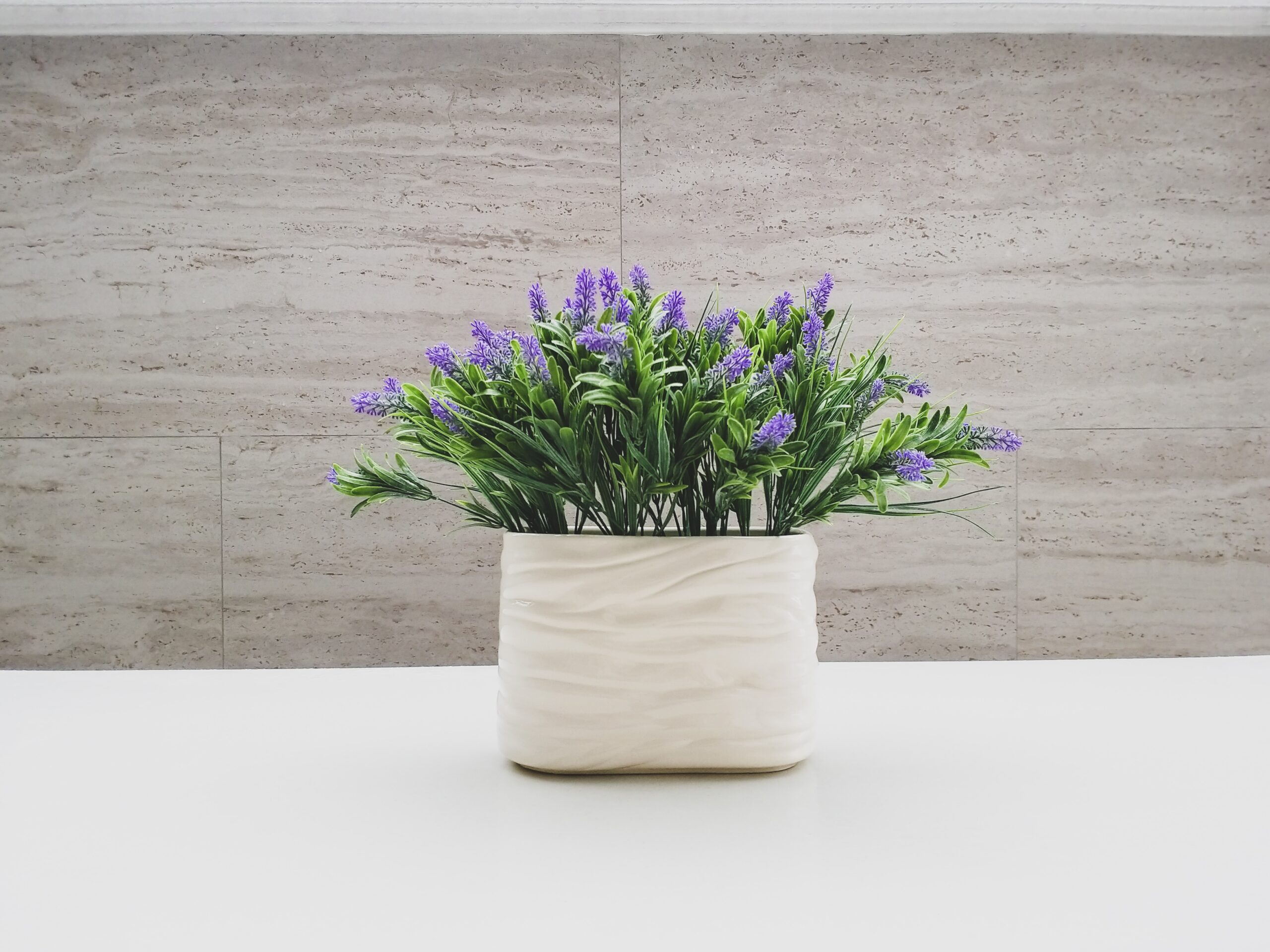lavender plant for anxiety
